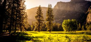 Carbon neutrality through tree planting